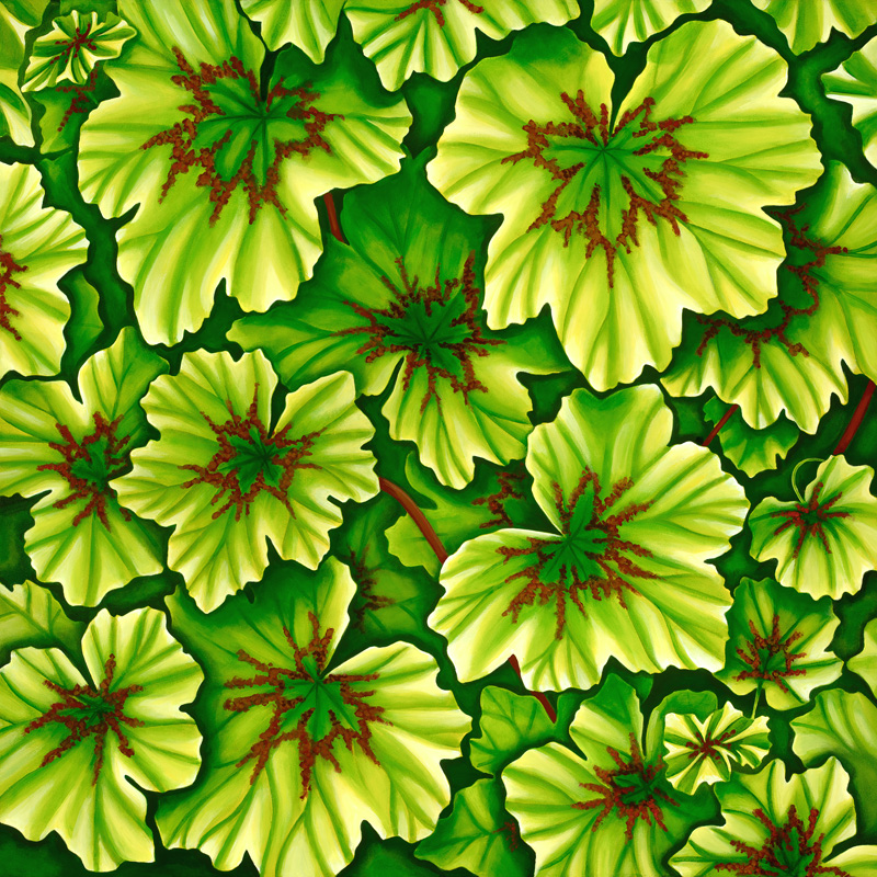 'Limelight Geranium'