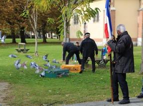 Pigeons_m.jpg