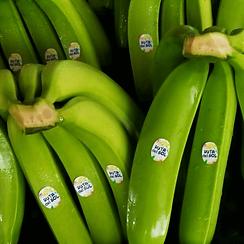 green banana brunch trademark Ruta del Sol.png