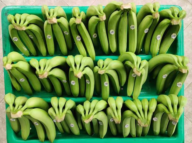 Bagatocorp tray with banana.jpeg