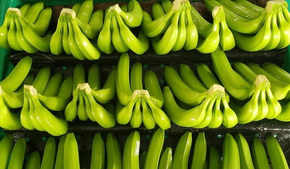 Bagatocorp fresh green bananas