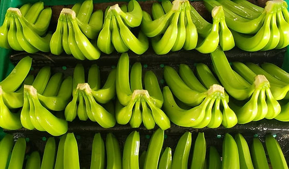 fresh green banana cavendish-min (1).jpg