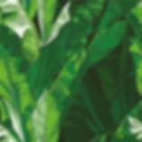 leaves background main .jpg