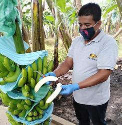 Bagatocorp banana check