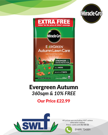 Evergreen Autumn-01.png