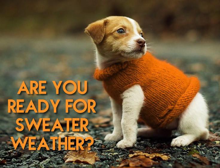 Renew Dermatology blog sweater weather