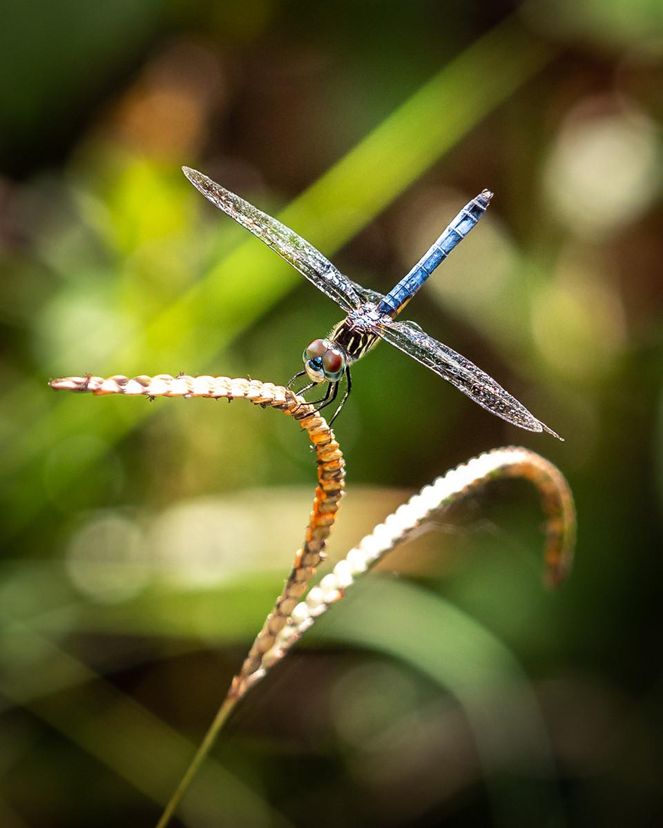 PDI - The DragonFly by John Davidson (10 marks)