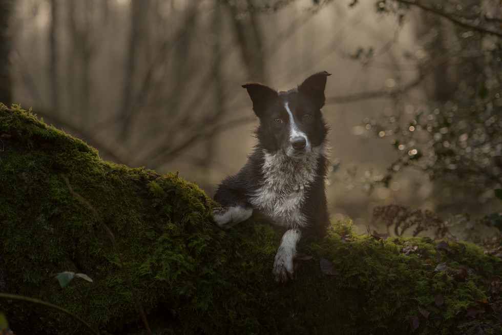 COLOUR - Skye by Philip Blair (10 marks)