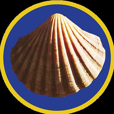 Muschel-frei-rund-blauGelb-1a.png