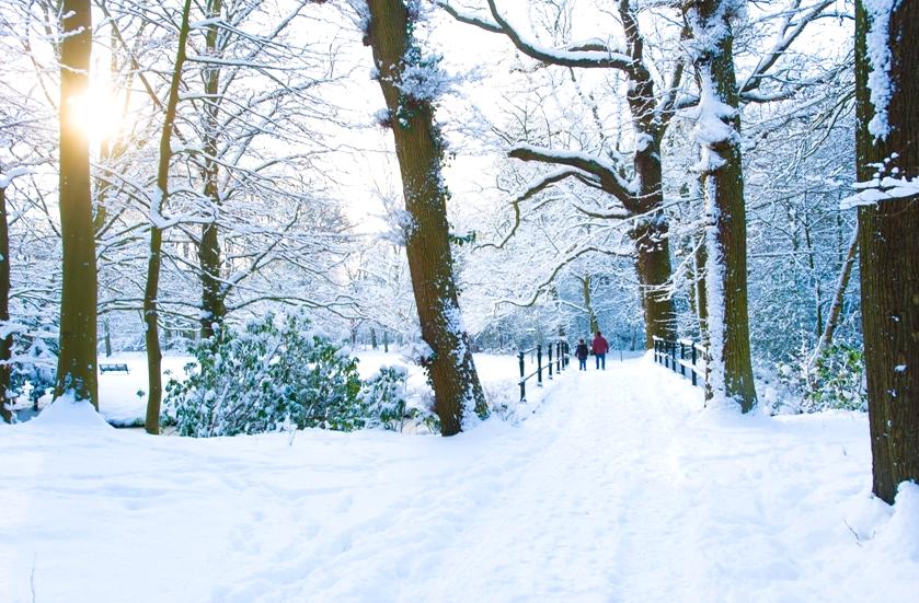 Kasteel de Wittenburg Oprijlaan Winter