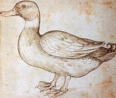 duck-leonardo-da-vinci.jpg