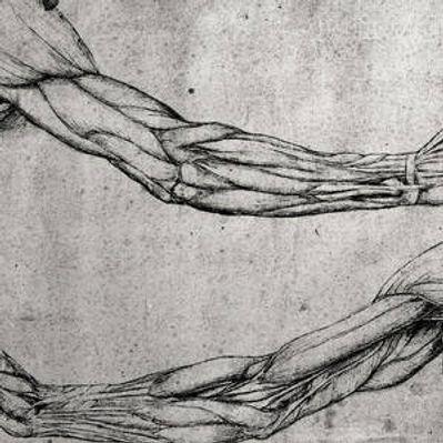 study-of-arms-leonardo-da-vinci.jpg