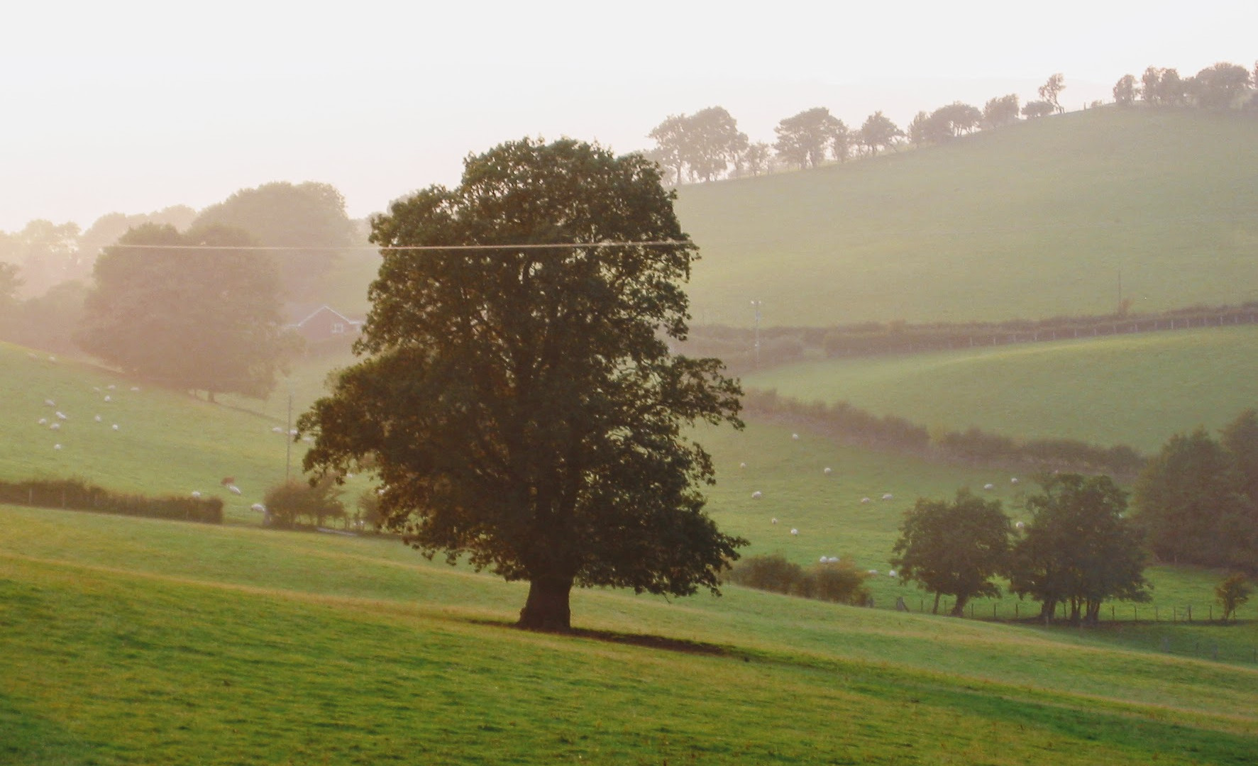 Lovely Welsh Oak