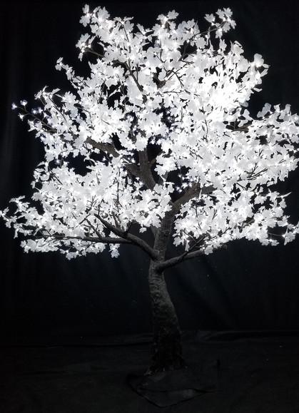 10 Foot -White Mapple - Bright White