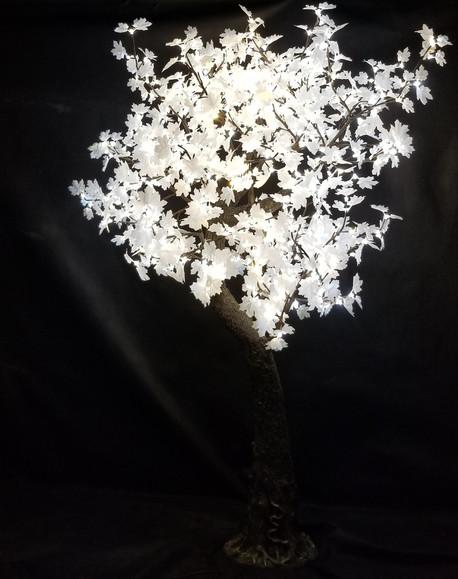 7 Foot - White Maple - Soft White
