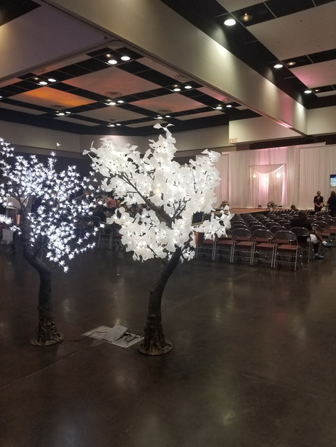 7' White Maple and 7' Cherry Blossom