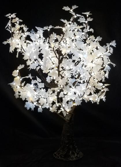 5 Foot - White Maple - Soft White