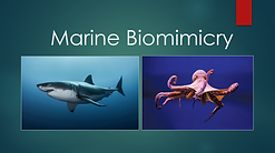 marine biomimicry.png