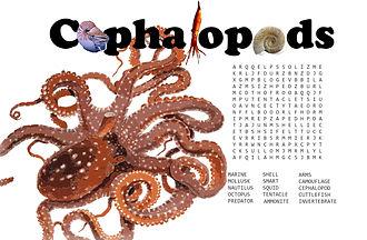 cephalopod word search.jpg