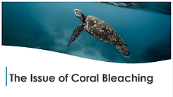 Untitledcoral bleach.png