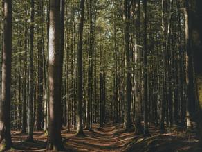 3 Erlebnisse für deinen Kurzurlaub im Bayerischen Wald