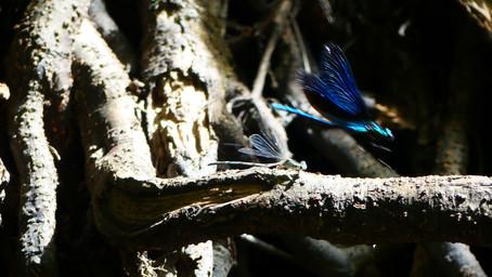 Art singulier et libellules.