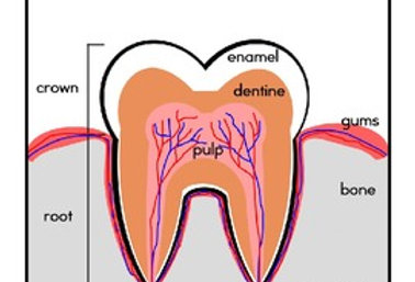 Dental Thematic Unit
