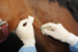 Veterinarian doctor with horse - intrave