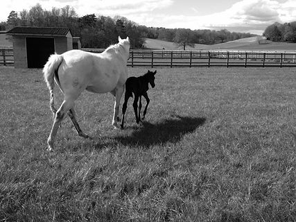 mare and foal.jpeg