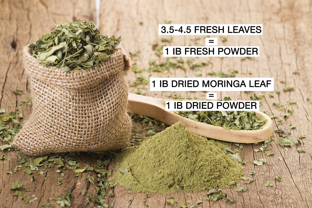 Moringa weight for fresh leaves vs dried powder