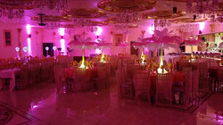 Ostrich feather birthday rental