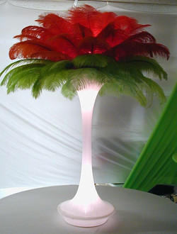Ostrich Feathers Colors