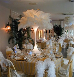 Ostrich Plume feathers rental