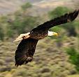 L'aigle est le messager entre la terre et les énergies du ciel
