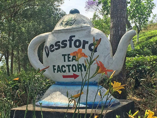 Dessford TEA FACTORY紅茶写真