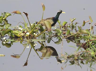 nepal-ajiarennkaku.jpg
