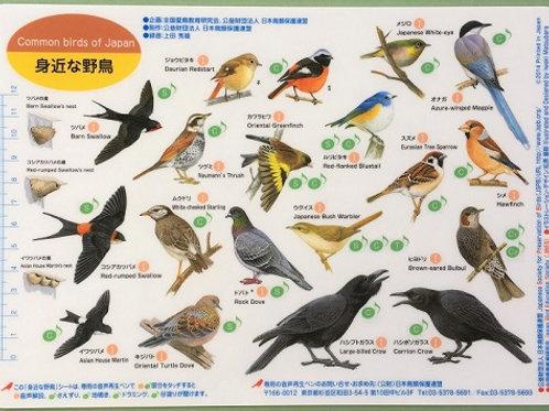野鳥シート 身近な野鳥