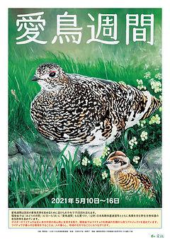 2021令和3年度愛鳥週間用ポスター.jpg