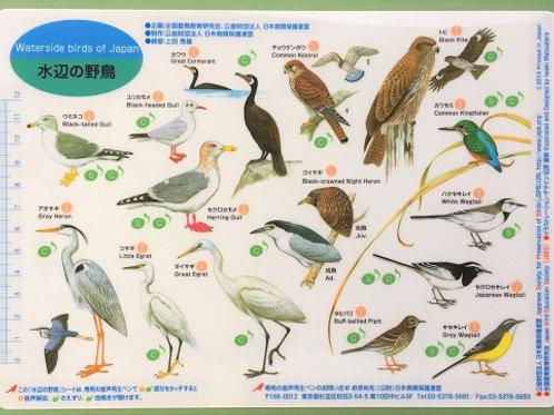 野鳥シート 水辺の野鳥