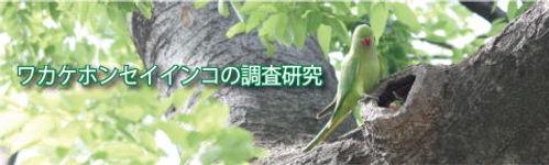 obiwakake1.jpg