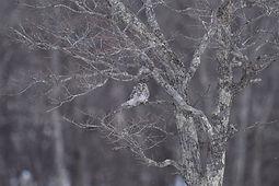 1月・フクロウ・片山 哲也さま DSC_1503 のコピー.jpg