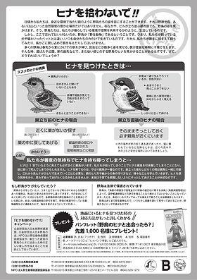 B4・日本鳥類保護連盟(2021年版)ウラ.jpg