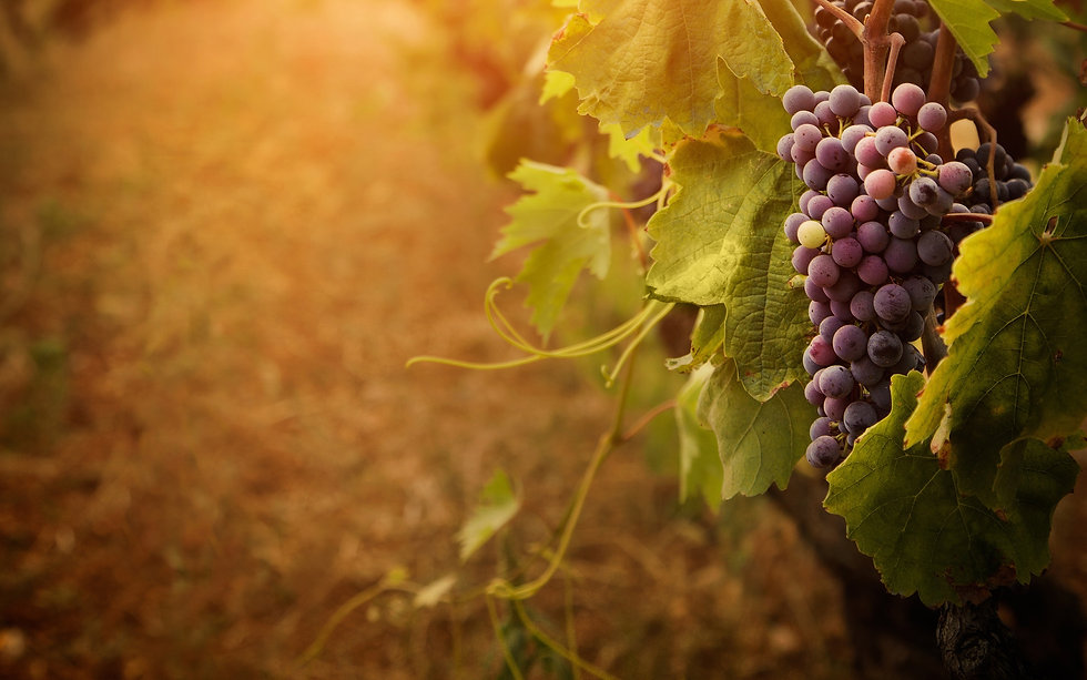 grapevine-2880x1800.jpg