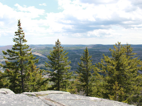NB Media Co-op: Researcher finds New Brunswick's tree species will shift with climate change