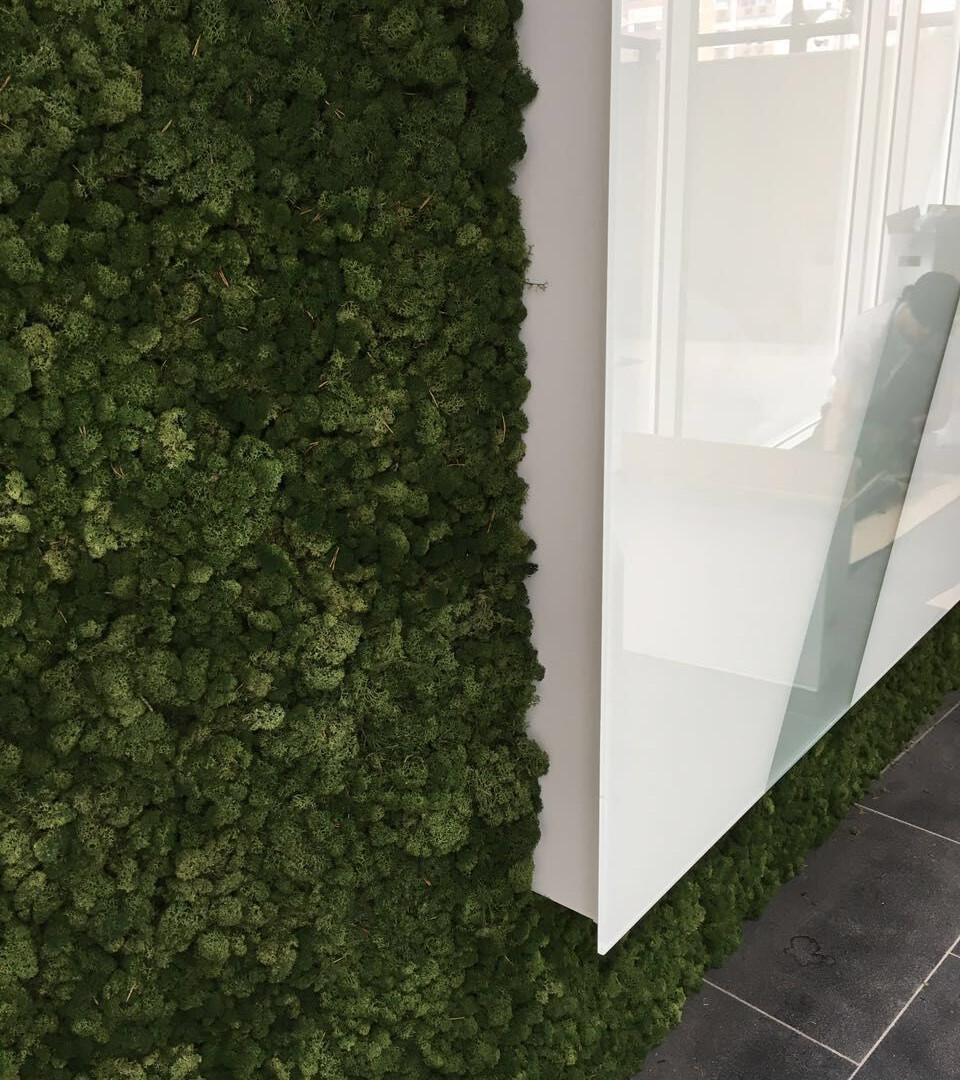 Detalhe Moss