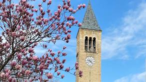 よく耳にするアイビーリーグって何?あのハーバード大学も入っている私立名門校群について解説!