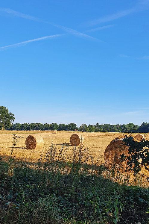 Fields of Germany