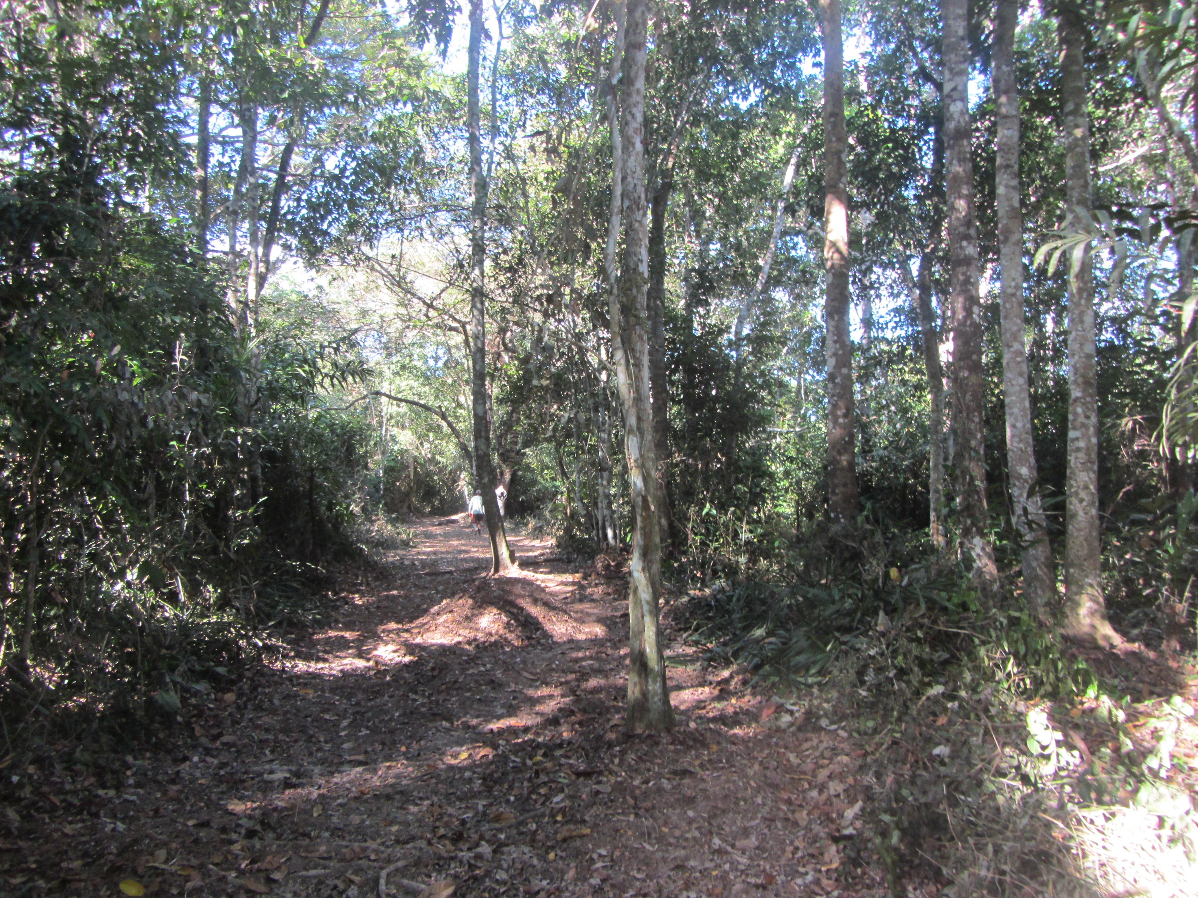 camino ayahuasca ojo de luna
