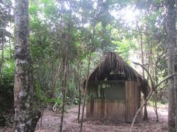 tambo ayahuasca ojo de luna