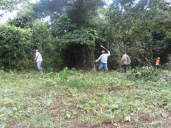 cultivando ayahuasca ojo de luna